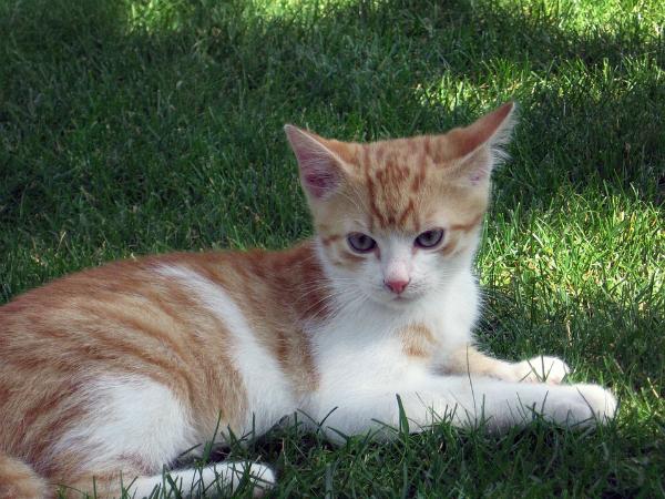 Chiêm bao thấy con mèo là điềm báo tốt hay xấu