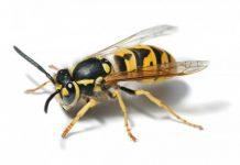 Ong bay vào nhà là điềm báo gì đánh số gì thì trúng lớn